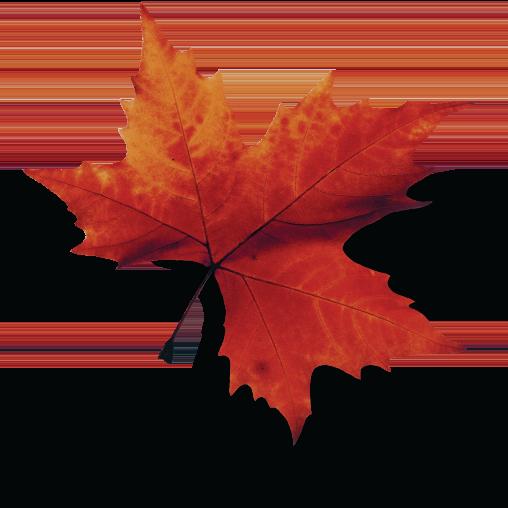 canada_post_img_leaf1