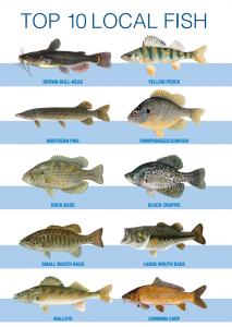 top 10 fish 213x300 - Fishing