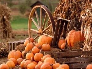 18198324 788702831306946 6262995582801818322 n 300x225 - 1st Annual Sugarbush Harvest Market