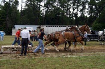Horse20pull JPG - RAMONA FALL FAIR