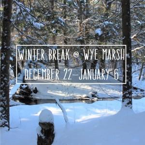 Winter Break at Wye Marsh  300x300 - WINTER BREAK AT THE WYE MARSH