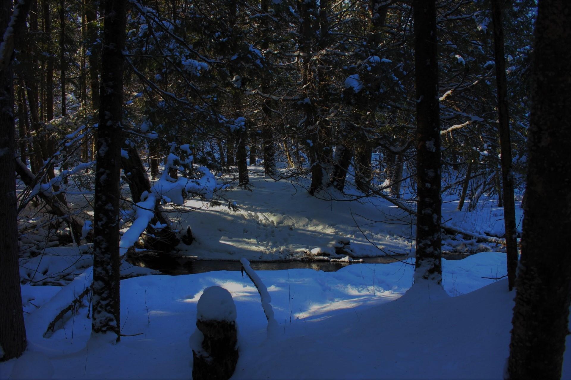 Snowy Trails Dark 2 - MARSH BY MOONLIGHT SNOWSHOE