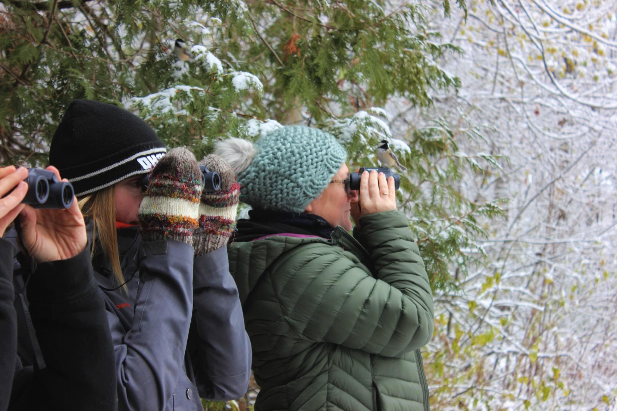 Build Your Birding Skills - BUILD YOUR BIRDING SKILLS