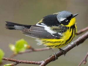 FB Migratory Birds 300x225 - SPRING MIGRATORY WORKSHOP