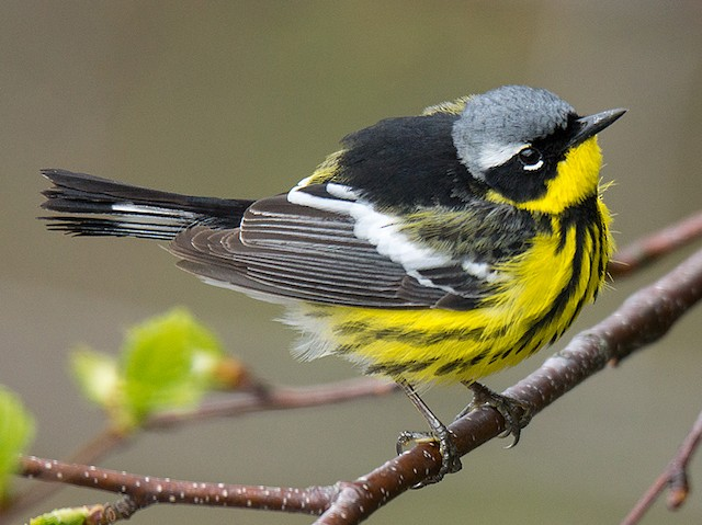 FB Migratory Birds - SPRING MIGRATORY WORKSHOP