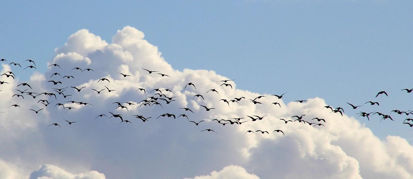 Migratory Birds Workshop - Fall Migratory Birding Workshop at Wye Marsh