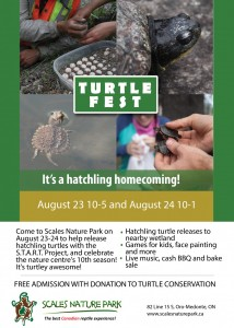 TurtleFest 2019 Poster 214x300 - TURTLEFEST - IT'S A HATCHLING HOMECOMING!