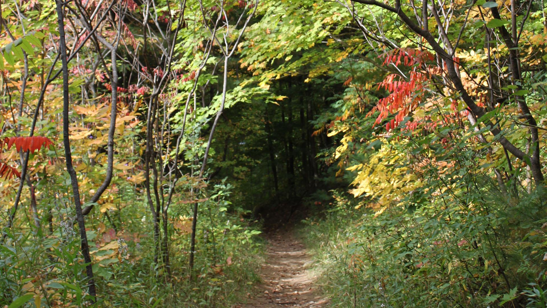 Trail Blog Photos - Fall Hiking Routes