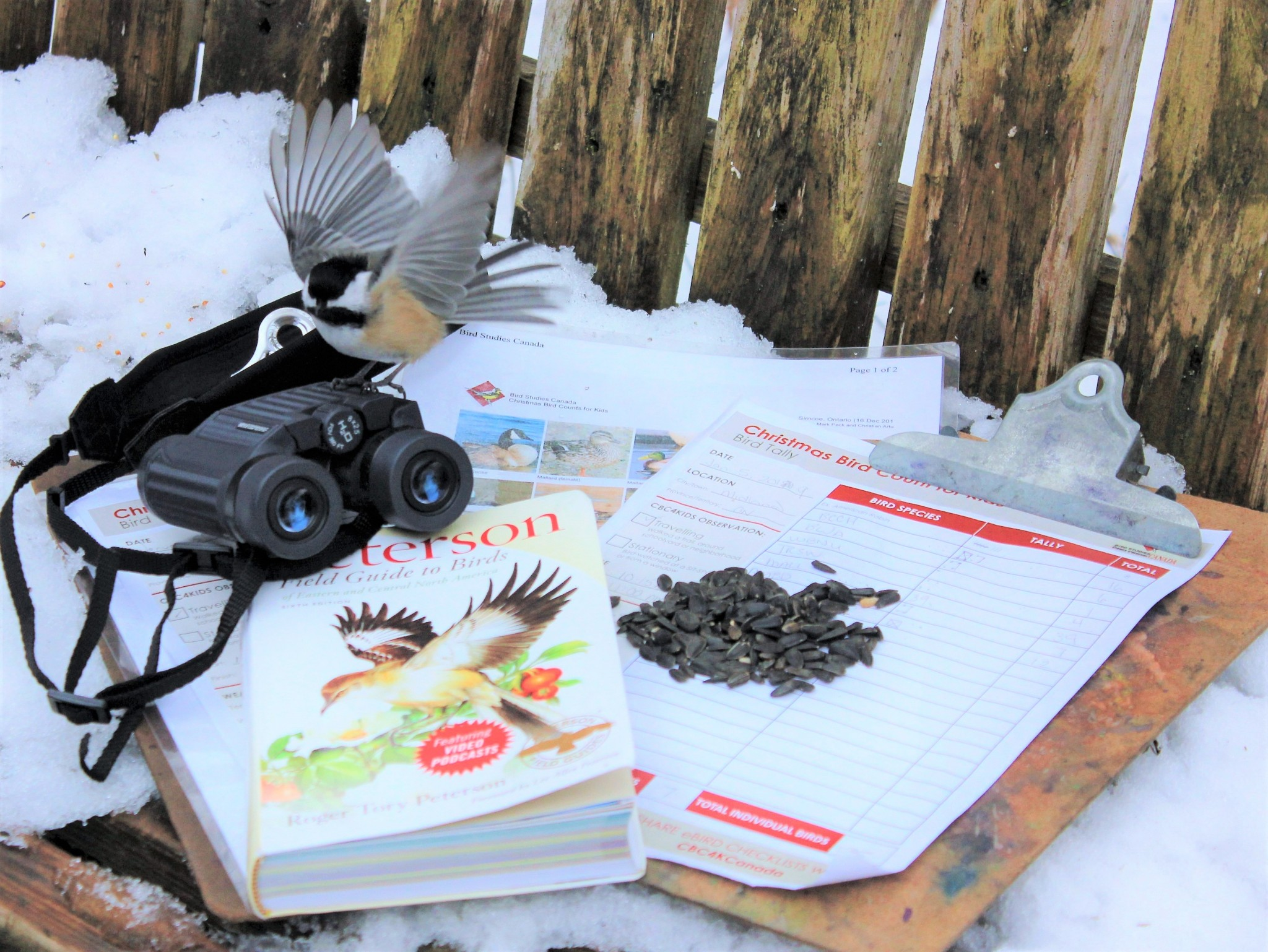 Chickadee Chirstmas Bird Count - CHRISTMAS BIRD COUNT