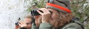 Chickadees Birdwatching Header 300x98 - WYE MARSH BACKYARD BIRDING WORKSHOP: FEEDER BIRDS