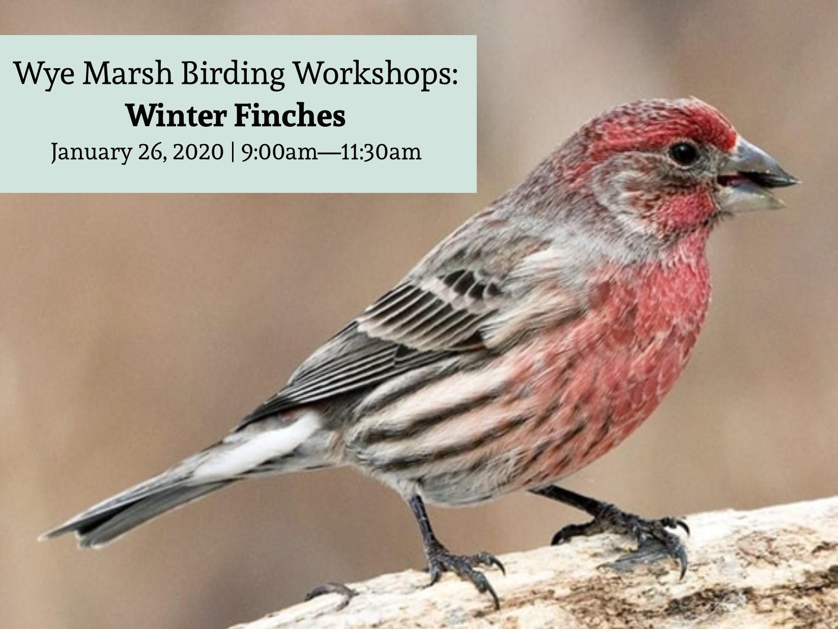 Winter Finches - WINTER FINCHES BIRDING WORKSHOP