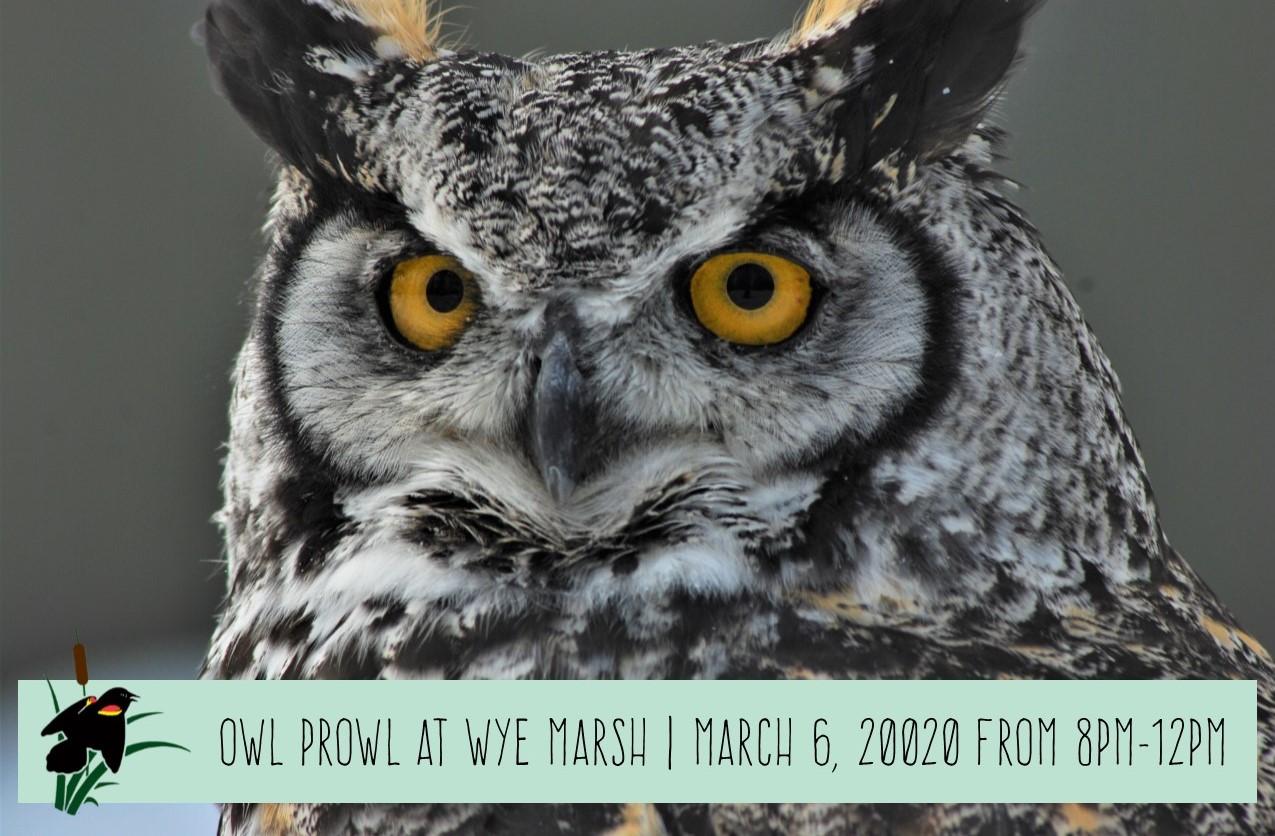 Owl Prowl Event Cal - OWL PROWL AT WYE MARSH