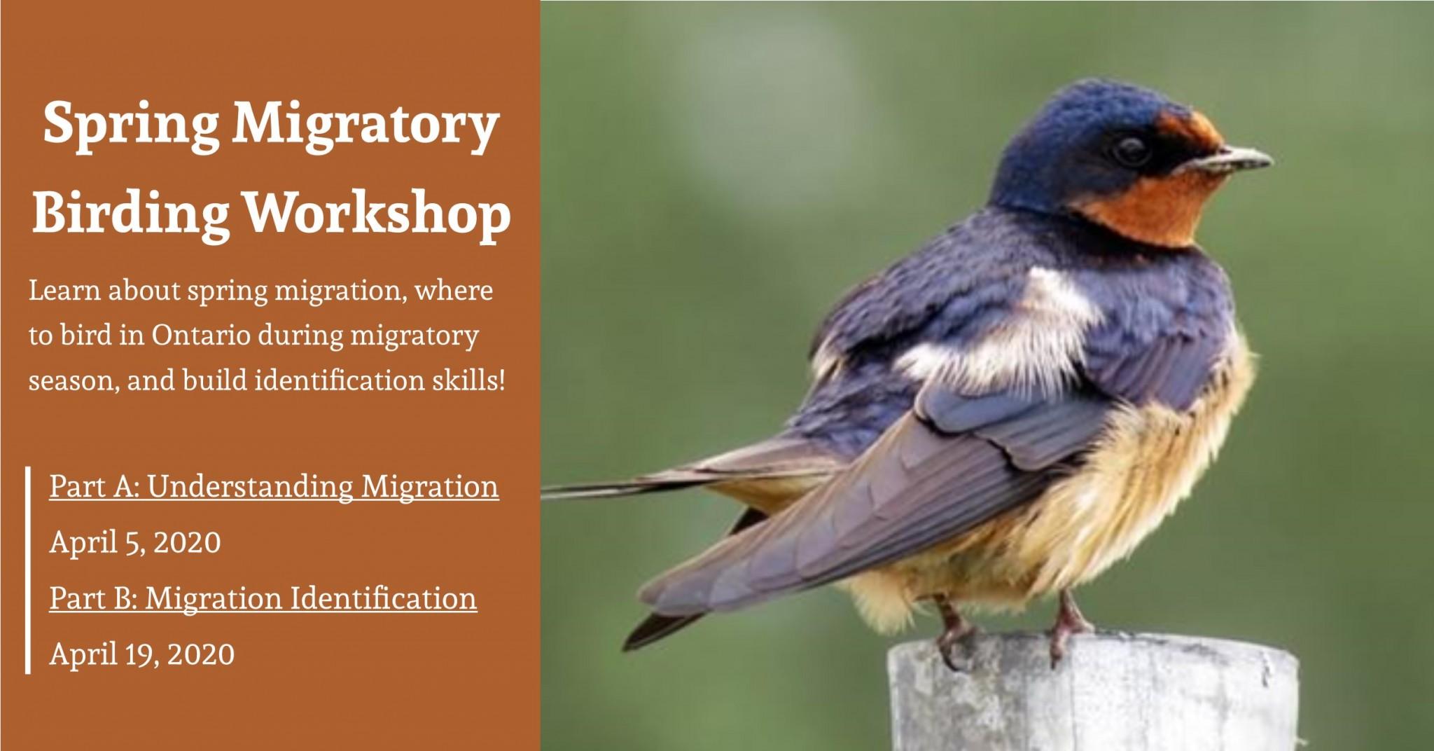 Spring Migratory Birding Workshop FB Cover Event Cal Image 1 - SPRING MIGRATORY BIRDING WORKSHOPS AT WYE MARSH - PART B