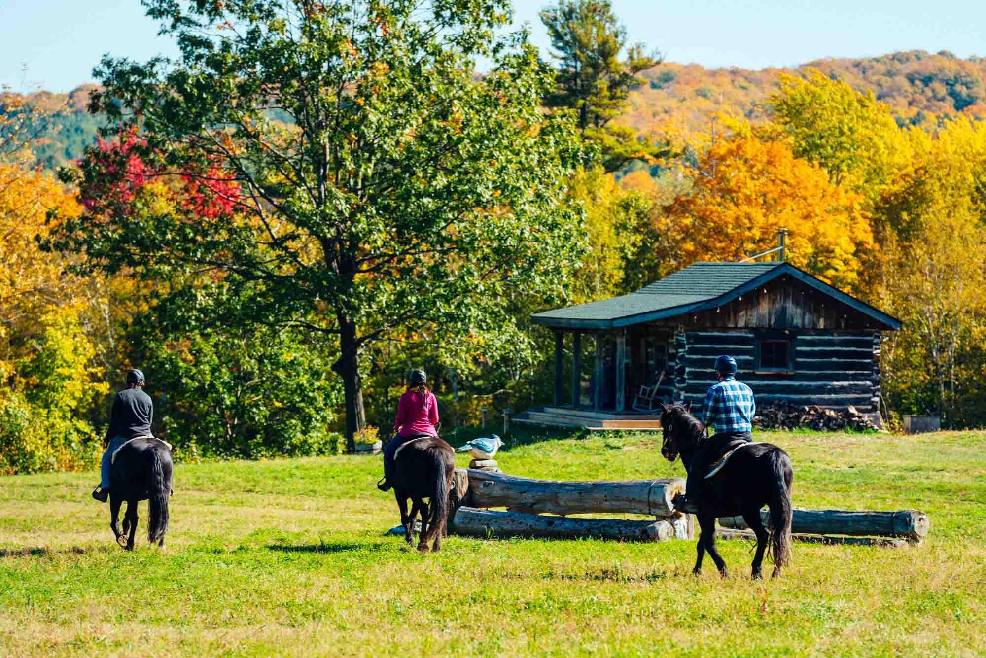 Glen Oro Medonte Fall Trail Ride Horse - Fall tours