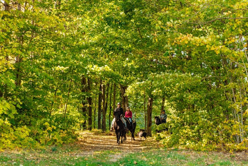 Oro Lifestyle 2019 Web 340 1024x684 - Tourism Spotlight: Horseback Riding & Stargazer Domes: Visiting Glen Oro Farm