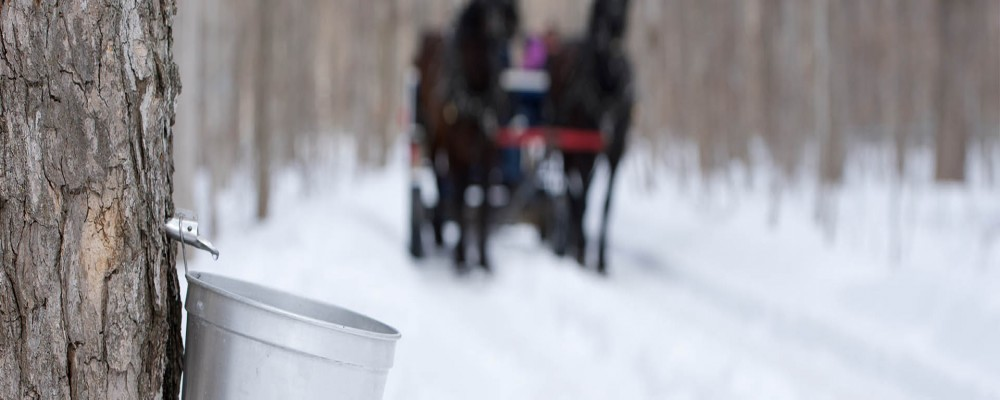 Maple Tours and Winter Fun in Ontario's Lake Country
