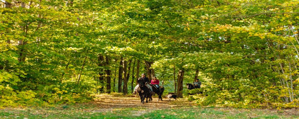 Tourism Spotlight: Horseback Riding & Stargazer Domes: Visiting Glen Oro Farm